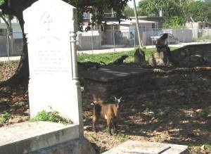 Goats and Graves:  (c) Randy Mazie