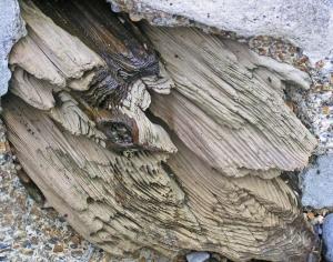 Sea-Washed Wood St Margaret's Bay Kent