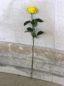 The 'Peace' Rose