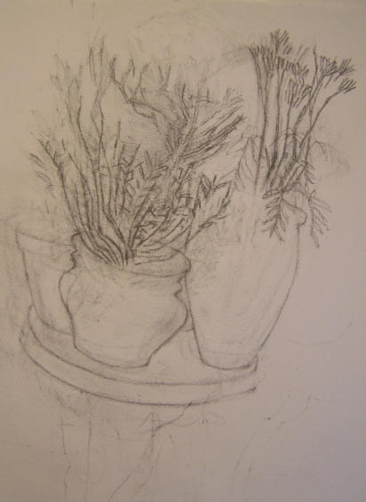 Drawing Plants Garden Table
