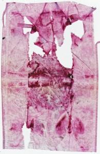Teabag Herbal Pink IV 10 December 2014