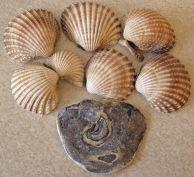 Bi-Valve Molluscs