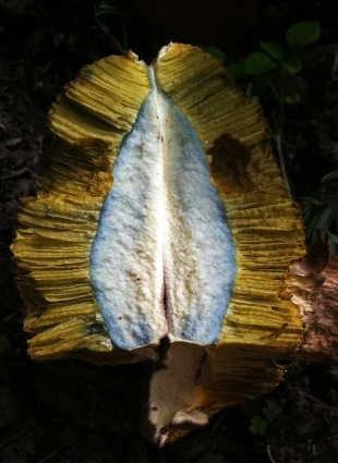 Fungus I Allotment September 2015