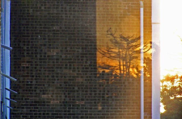 Dawn Tree Reflection Sidcup October 2015