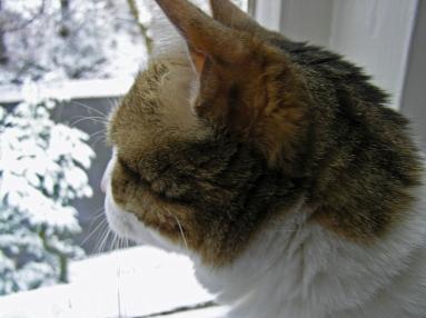 Keeks, Snow, Beechmont 2010