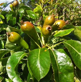 Pears Lottie 9 July 2016