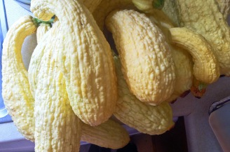 RHS Knobbly Courgettes August 2016