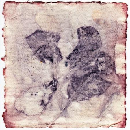 eco-print-with-madder-dye-on-khadi-paper-iii-16-january-2016