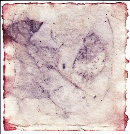 eco-print-with-madder-dye-on-khadi-paper-iv-16-january-2016