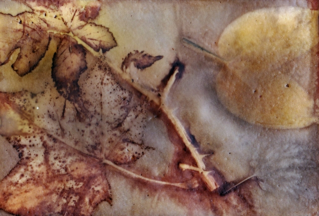 eco-print-encaustic-watercolour-postcard-i-21-february-2017