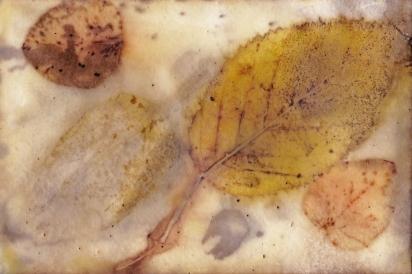 eco-print-encaustic-watercolour-postcard-ii-21-february-2017