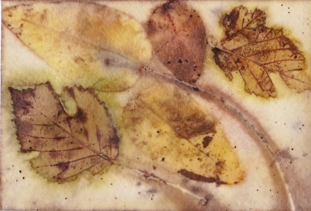 eco-print-encaustic-watercolour-postcard-iv-21-february-2017
