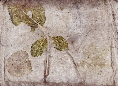 Eco Print on Watercolour Backing Board Sheet using Found Bramble Leaves, Eucalyptus, Found Japanese Red Maple